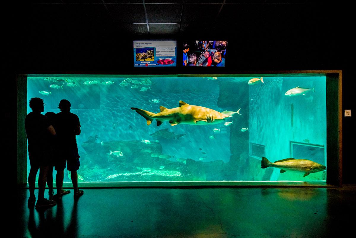aquarium-seville